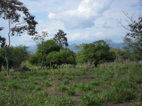 Main Photo: : Las Lajas Home for sale (Chiriqui)