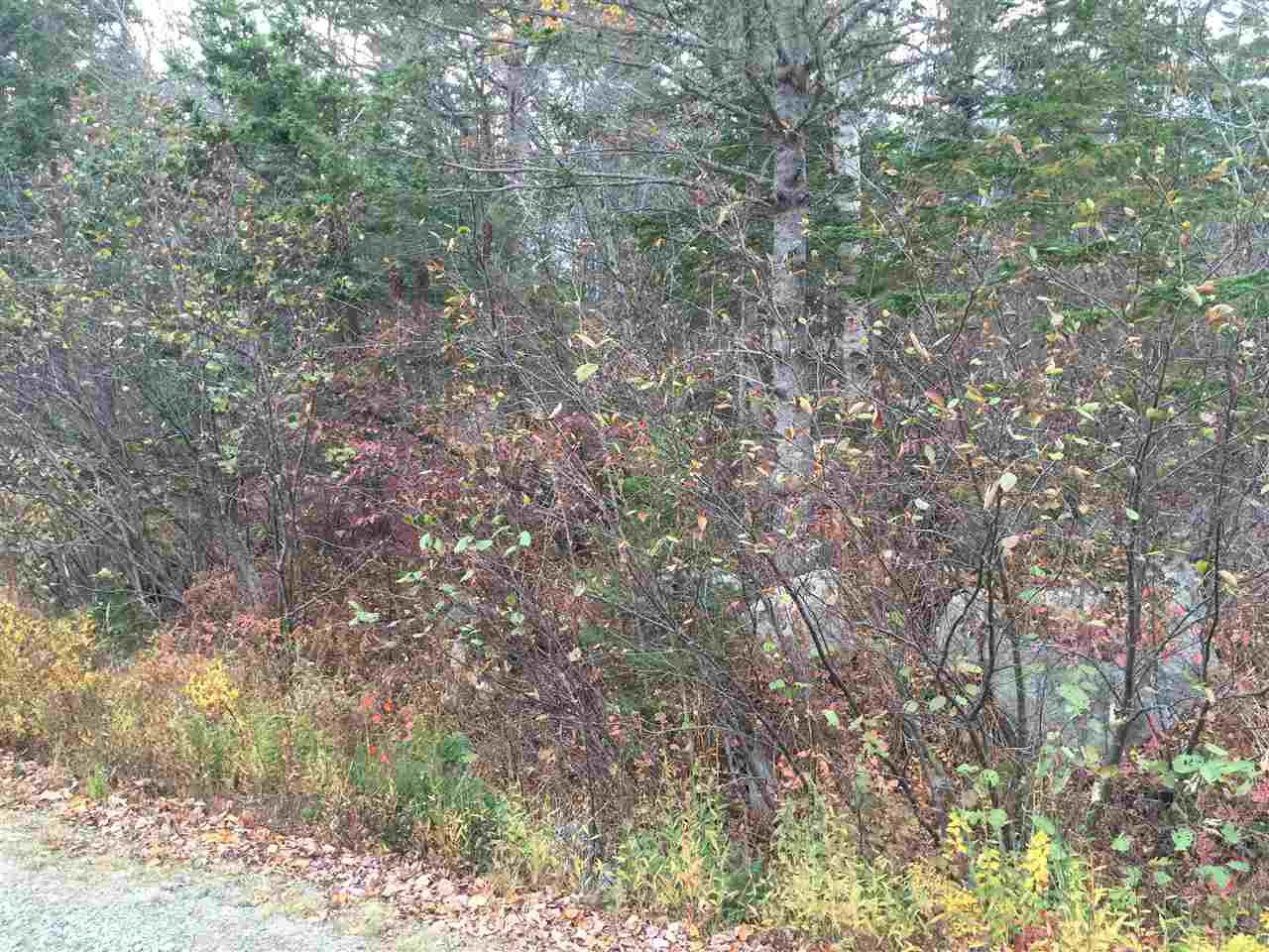 Photo 2: Photos: Lot 2 Beech Hill Road in Hunt's Point: 406-Queens County Vacant Land for sale (South Shore)  : MLS®# 201728017