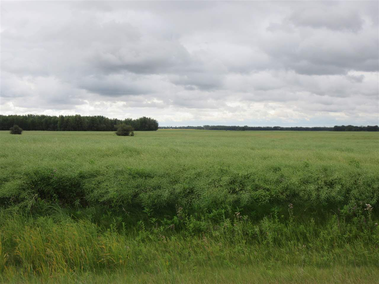 Main Photo: RR 253 Twp 620: Rural Westlock County Rural Land/Vacant Lot for sale : MLS®# E4130559