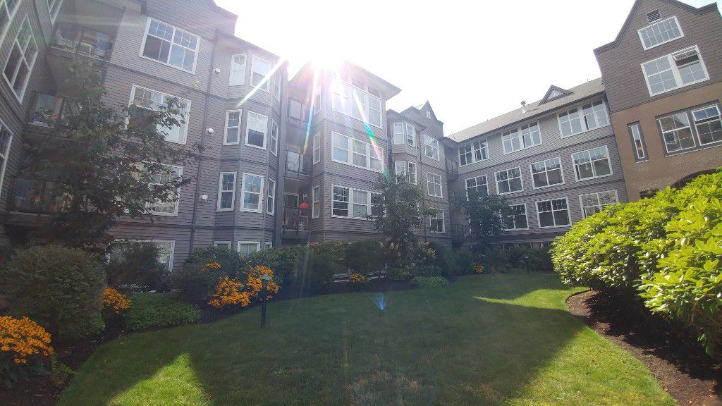 Main Photo: #423 20200 56th Ave in Langley: Condo for rent