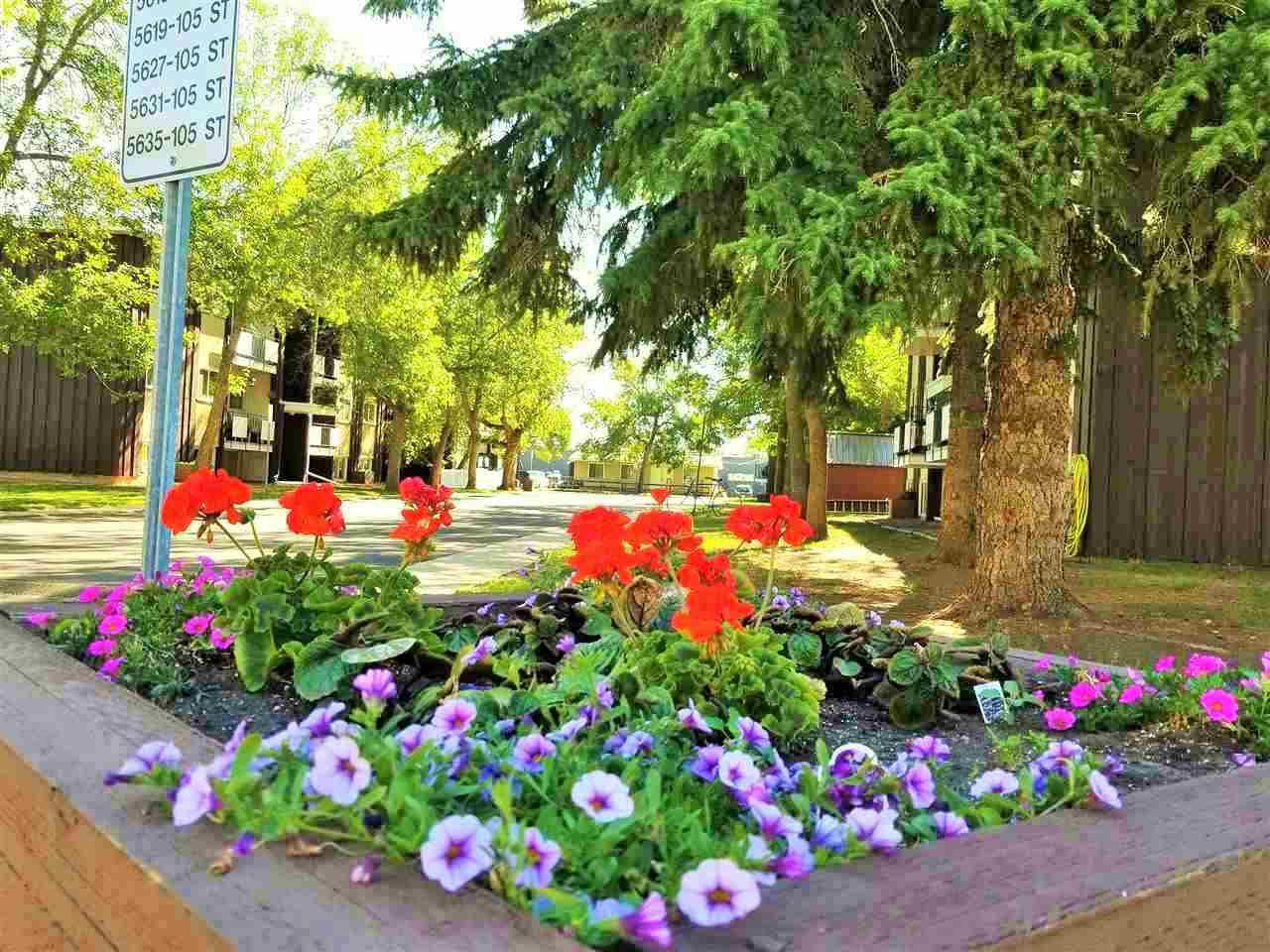 Main Photo: 4 5635 105 Street in Edmonton: Zone 15 Condo for sale : MLS®# E4155811