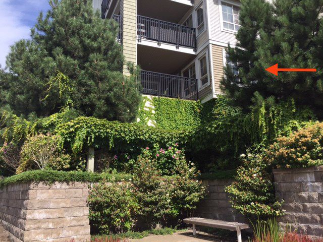 """Main Photo: 105 2088 BETA Avenue in Burnaby: Brentwood Park Condo for sale in """"MEMENTO"""" (Burnaby North)  : MLS®# R2200714"""