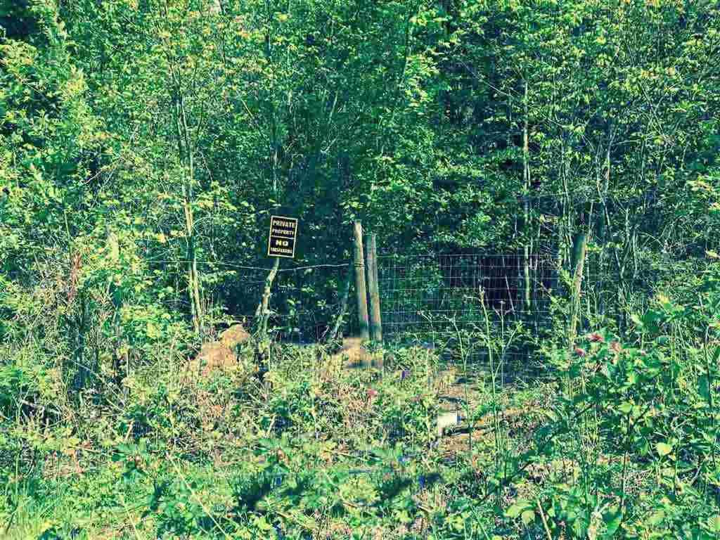 Main Photo: 12628 246 Street in Maple Ridge: Websters Corners Home for sale : MLS®# R2087626