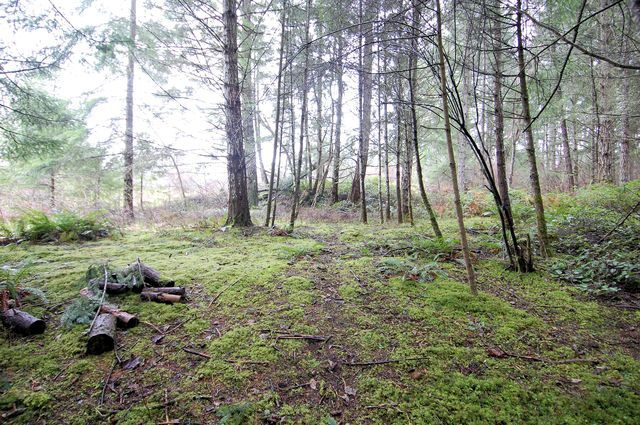 Photo 15: Photos: 2024 STEWART ROAD in NANOOSE BAY: House for sale : MLS®# 352119