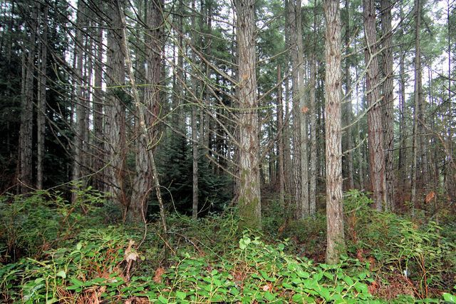 Photo 18: Photos: 2024 STEWART ROAD in NANOOSE BAY: House for sale : MLS®# 352119