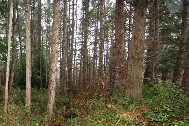 Photo 19: Photos: 2024 STEWART ROAD in NANOOSE BAY: House for sale : MLS®# 352119