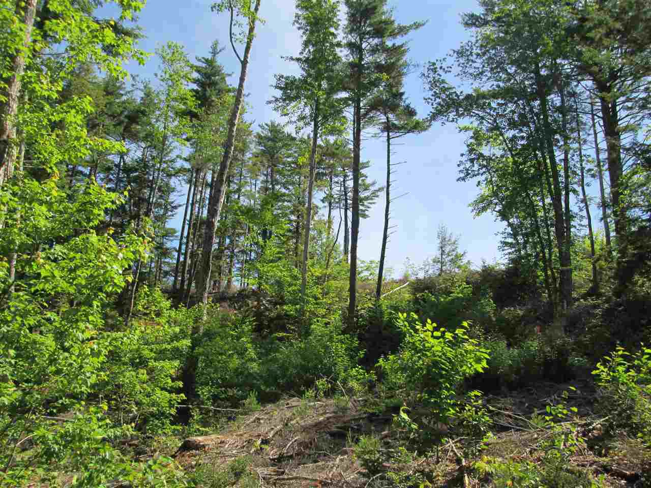 Photo 7: Photos: Lot 41 Homestead Estates Drive in Italy Cross: 405-Lunenburg County Vacant Land for sale (South Shore)  : MLS®# 201610383