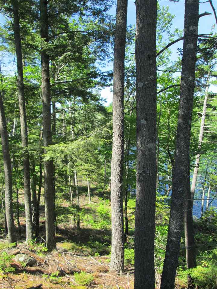 Photo 16: Photos: Lot 41 Homestead Estates Drive in Italy Cross: 405-Lunenburg County Vacant Land for sale (South Shore)  : MLS®# 201610383