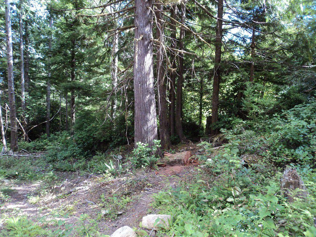 Beautiful Cedar and Hemlock Forest