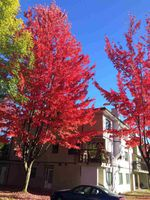 "Main Photo: 204 7150 133 Street in Surrey: West Newton Condo for sale in ""Suncreek Estates"" : MLS®# R2321410"
