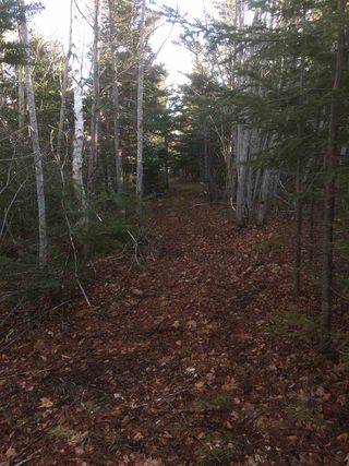 Photo 10: Lot 2 Shore Road in Lower Barneys River: 108-Rural Pictou County Vacant Land for sale (Northern Region)  : MLS®# 202008057