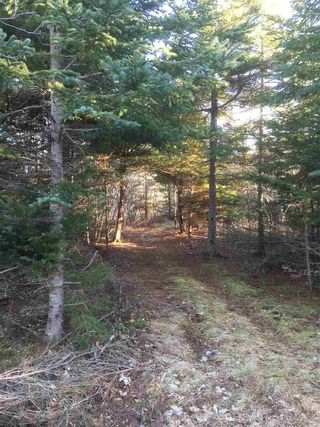 Photo 11: Lot 2 Shore Road in Lower Barneys River: 108-Rural Pictou County Vacant Land for sale (Northern Region)  : MLS®# 202008057