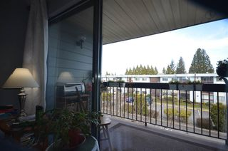 """Photo 15: 312 2277 N MCCALLUM Road in Abbotsford: Central Abbotsford Condo for sale in """"ALAMEDA COURT"""" : MLS®# R2521357"""
