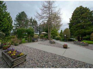 Photo 4: 318 12890 17 AV in Surrey: Home for sale : MLS®# F1408949