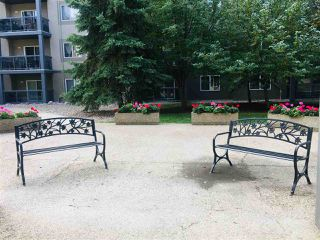 Photo 16: 243 279 SUDER GREENS Drive in Edmonton: Zone 58 Condo for sale : MLS®# E4175448