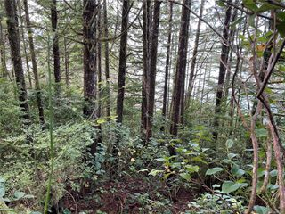 Photo 21:  in : PA Ucluelet Land for sale (Port Alberni)  : MLS®# 861692