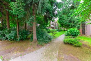"""Photo 22: 33 2432 WILSON Avenue in Port Coquitlam: Central Pt Coquitlam Condo for sale in """"ORCHARD VALLEY"""" : MLS®# R2485264"""