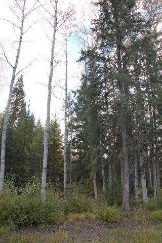 Photo 5: LOT 49 WOLFE ROAD in 100 Mile House: Horse Lake Land Only for sale (100 Mile House (Zone 10))  : MLS®# R2308751