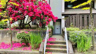 "Photo 5: 4 385 GINGER Drive in New Westminster: Fraserview NW Condo for sale in ""FRASER MEWS"" : MLS®# R2464824"