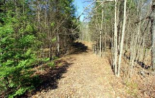 Photo 2: Lt 8 Maritime Road in Kawartha Lakes: Rural Bexley Property for sale : MLS®# X4728533