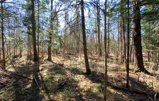 Photo 7: Lt 8 Maritime Road in Kawartha Lakes: Rural Bexley Property for sale : MLS®# X4728533