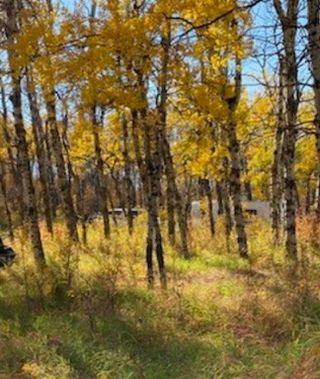 Photo 5: 48155 W 242 Ave.: Rural Foothills County Land for sale : MLS®# C4293433