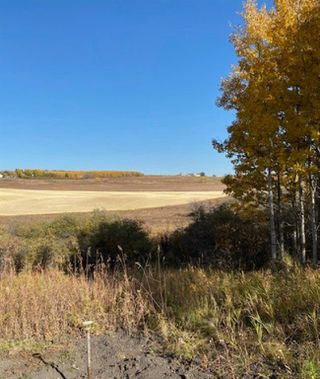 Photo 6: 48155 W 242 Ave.: Rural Foothills County Land for sale : MLS®# C4293433