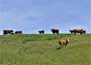 Photo 19: : Rural Foothills County Land for sale : MLS®# C4302344