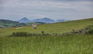 Photo 6: : Rural Foothills County Land for sale : MLS®# C4302344