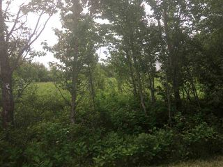 Photo 5: 56315 Rge Rd 112A: Rural St. Paul County Rural Land/Vacant Lot for sale : MLS®# E4203726