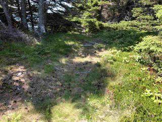 Photo 31: 2525 Main A Dieu Road in Main-À-Dieu: 207-C. B. County Residential for sale (Cape Breton)  : MLS®# 202005663