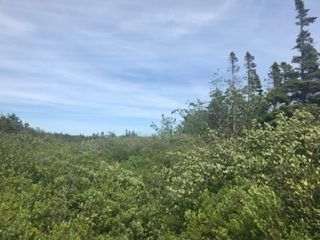 Photo 2: 217 Highway in Central Grove: 401-Digby County Vacant Land for sale (Annapolis Valley)  : MLS®# 202001807