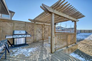 Photo 45: 27 SKYVIEW SPRINGS Cove NE in Calgary: Skyview Ranch Detached for sale : MLS®# A1053175