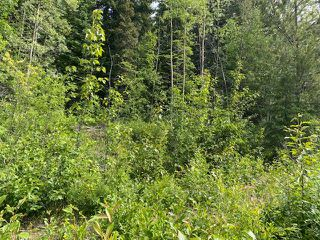"""Photo 6: LOT 6 CHIEF LAKE Road in Prince George: Nukko Lake Land for sale in """"CHIEF LAKE"""" (PG Rural North (Zone 76))  : MLS®# R2464872"""