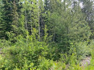 """Photo 4: LOT 6 CHIEF LAKE Road in Prince George: Nukko Lake Land for sale in """"CHIEF LAKE"""" (PG Rural North (Zone 76))  : MLS®# R2464872"""
