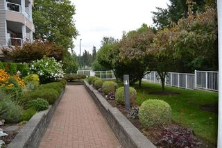 Photo 5: 318 11605 227 Street in Maple Ridge: East Central Condo for sale : MLS®# R2495059
