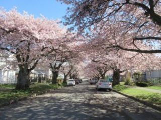 Photo 26: 3260 GRAVELEY Street in Vancouver: Renfrew VE House for sale (Vancouver East)  : MLS®# R2456621