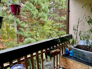 Photo 15: 308 3277 Quadra St in : SE Maplewood Condo for sale (Saanich East)  : MLS®# 856114