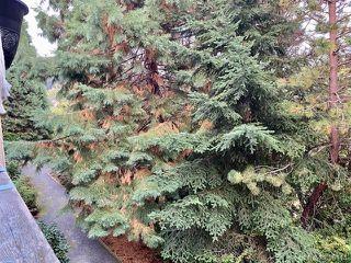 Photo 17: 308 3277 Quadra St in : SE Maplewood Condo for sale (Saanich East)  : MLS®# 856114