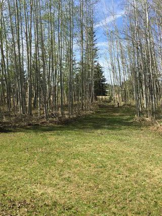 Photo 12: 7 Hauser's Cove: Rural Wetaskiwin County Rural Land/Vacant Lot for sale : MLS®# E4192451