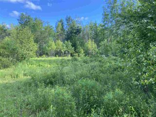 Photo 5: 38 Stewart Road in Lyons Brook: 108-Rural Pictou County Vacant Land for sale (Northern Region)  : MLS®# 202011938