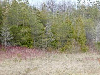 Photo 15: Pt Lt 7 Hwy 124 in Melancthon: Rural Melancthon Property for sale : MLS®# X4759358