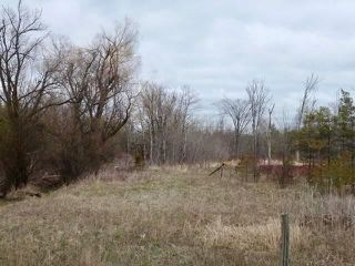 Photo 9: Pt Lt 7 Hwy 124 in Melancthon: Rural Melancthon Property for sale : MLS®# X4759358