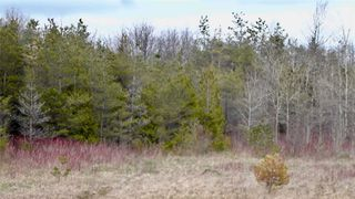 Photo 17: Pt Lt 7 Hwy 124 in Melancthon: Rural Melancthon Property for sale : MLS®# X4759358