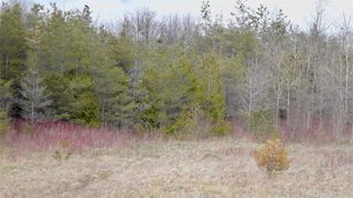Photo 25: Pt Lt 7 Hwy 124 in Melancthon: Rural Melancthon Property for sale : MLS®# X4759358