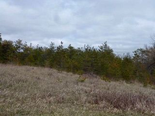 Photo 19: Pt Lt 7 Hwy 124 in Melancthon: Rural Melancthon Property for sale : MLS®# X4759358