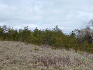 Photo 11: Pt Lt 7 Hwy 124 in Melancthon: Rural Melancthon Property for sale : MLS®# X4759358