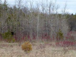 Photo 23: Pt Lt 7 Hwy 124 in Melancthon: Rural Melancthon Property for sale : MLS®# X4759358