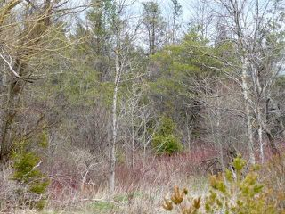 Photo 7: Pt Lt 7 Hwy 124 in Melancthon: Rural Melancthon Property for sale : MLS®# X4759358