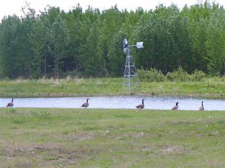Photo 12: 5 3410 Ste Anne Trail: Rural Lac Ste. Anne County Rural Land/Vacant Lot for sale : MLS®# E4191158